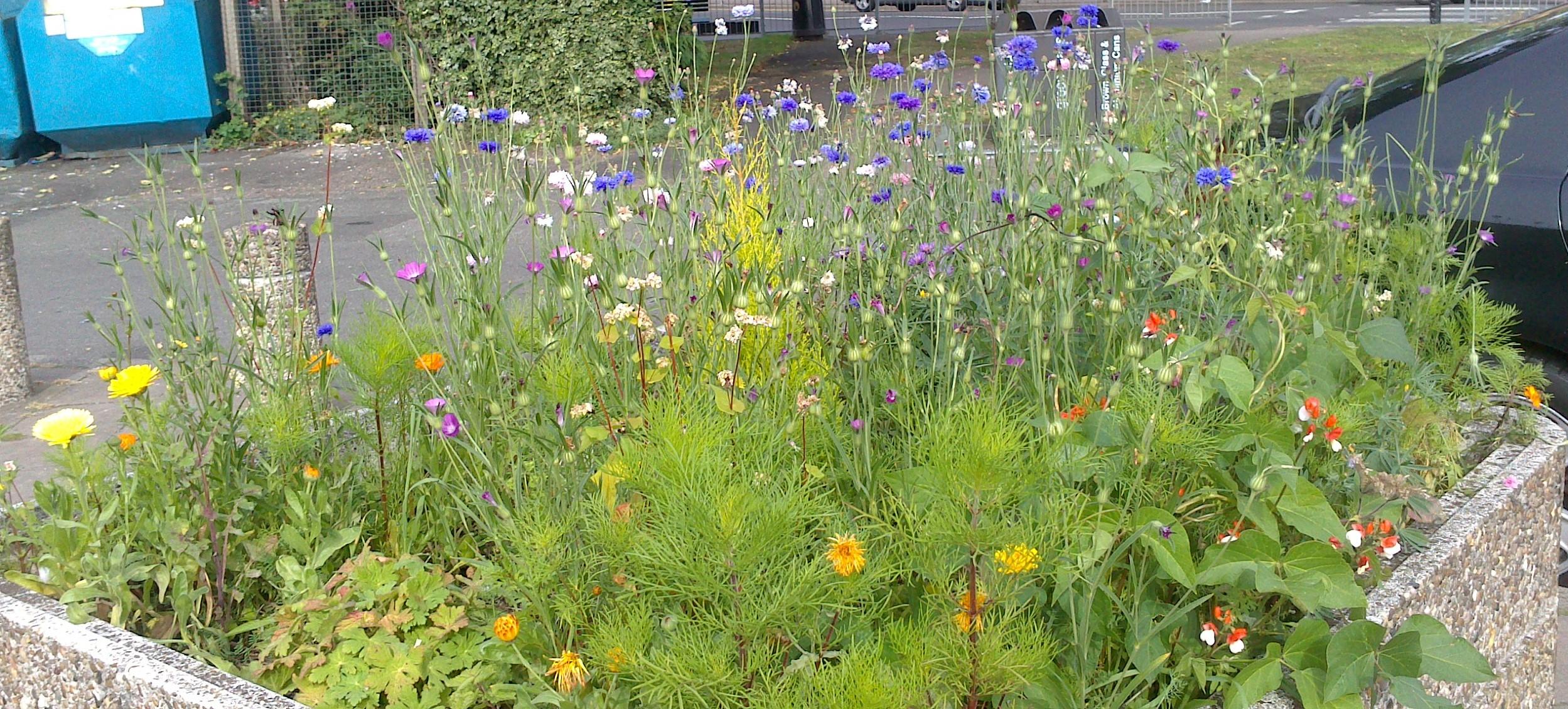Planter in full bloom
